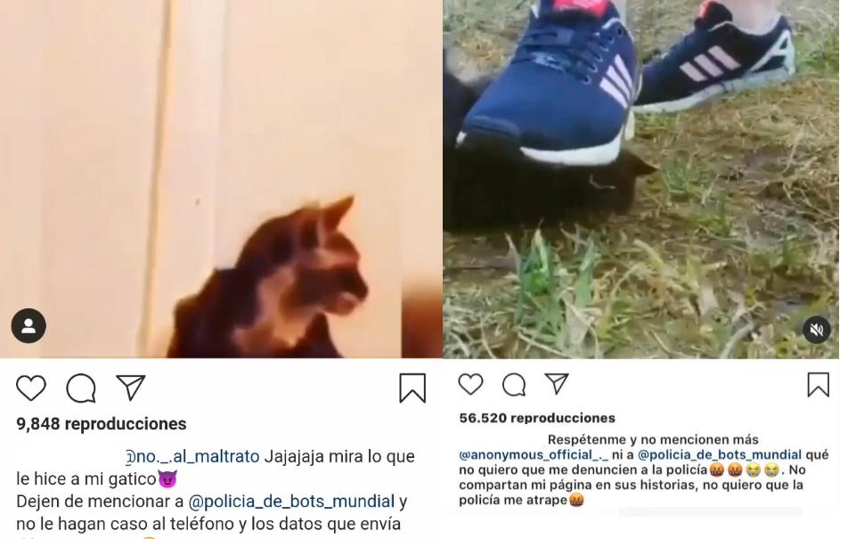 caso de maltrato animal vuelve a conmocionar a Punta Arenas