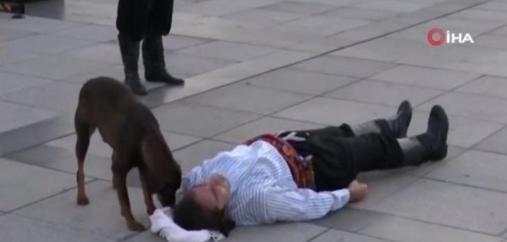 Perro intentó salvar a hombre que actuaba estar muerto