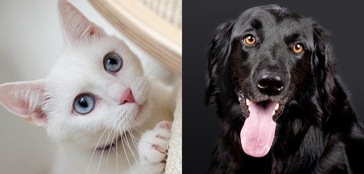 Gato blanco y perro negro