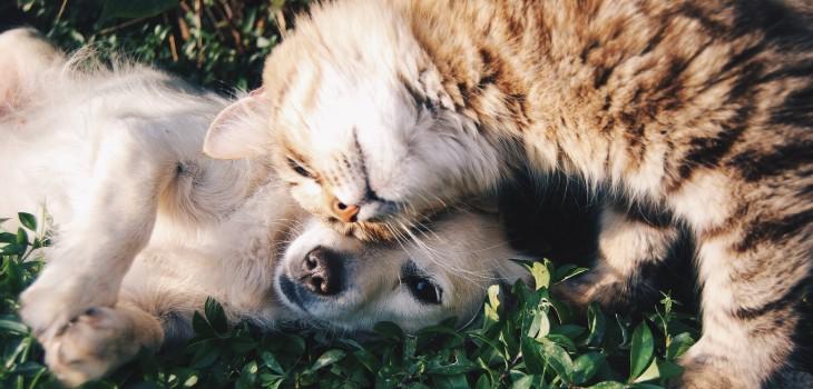 Un '18' sin sustos: 9 consejos para no pasar malos ratos con nuestras mascotas en Fiestas Patrias