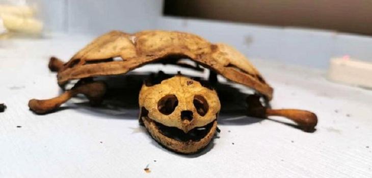 tortuga momificada