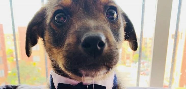 Vicente, el perro que quedó listo para ser adoptado