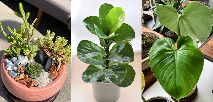 Plantas que no necesitan demasiado riego