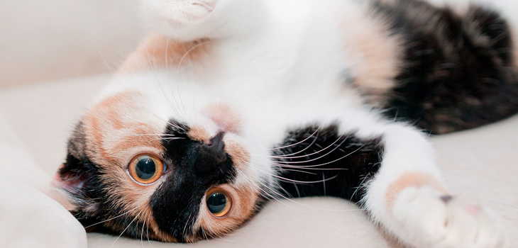personalidad de tu gato