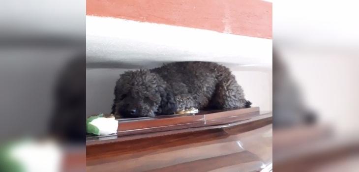 perrito dueña fallecida