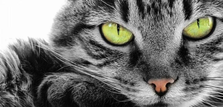 ¿Quieres saber qué edad humana tiene tu gato?