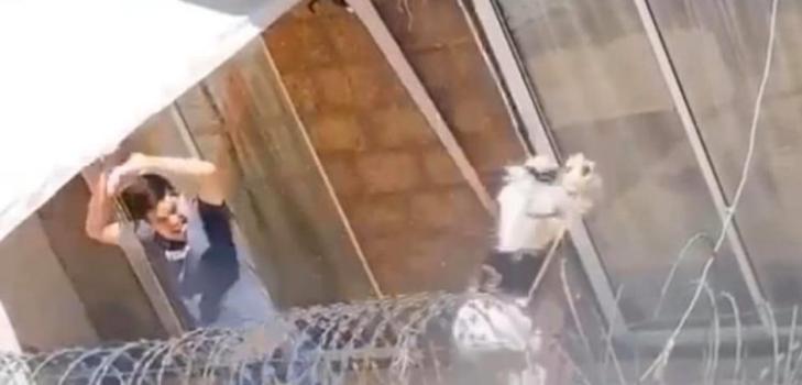 Condenan a hombre acusado de maltrato animal en Puente Alto