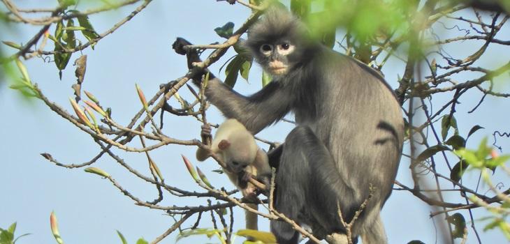 nueva especie de primate