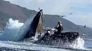 Una ballena casi se traga a dos kayakistas en California