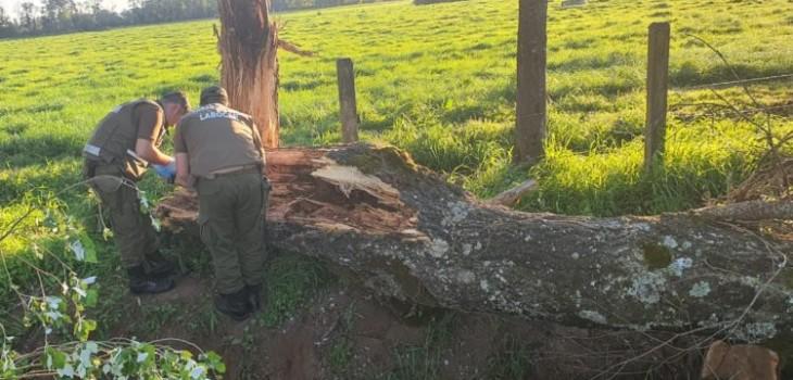 Niña de 2 años muere en accidente de tránsito: árbol cayó sobre auto en el que transitaba