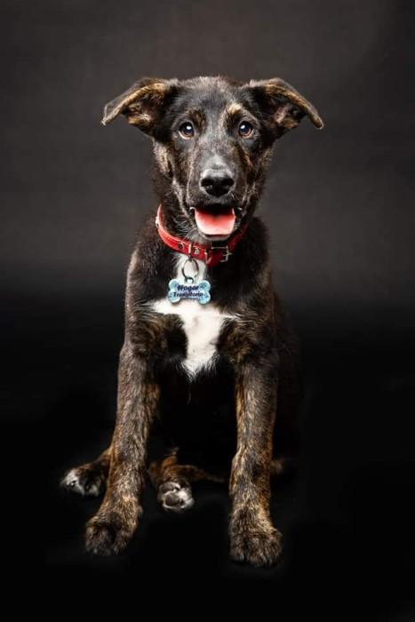 la historia de Marcelo Pablo, el cachorro que fue adoptado y devuelto a los días