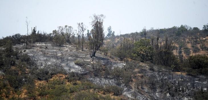 incendios quinta región
