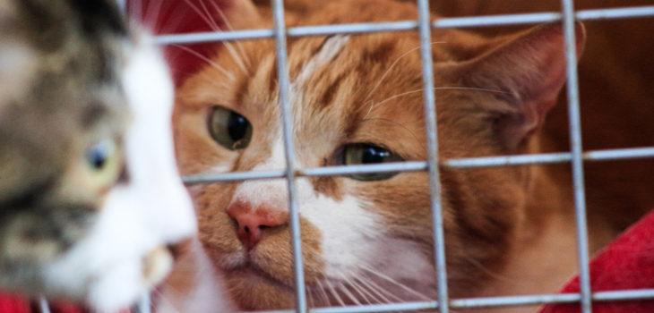 nuevas denuncias por efectos de alimentos en la salud de gatos