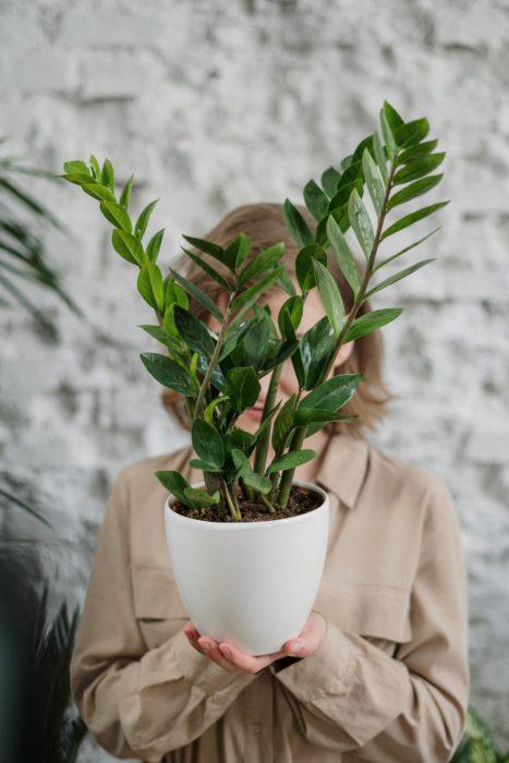 Agüita de limón: el secreto nutricional para ayudar a tu planta