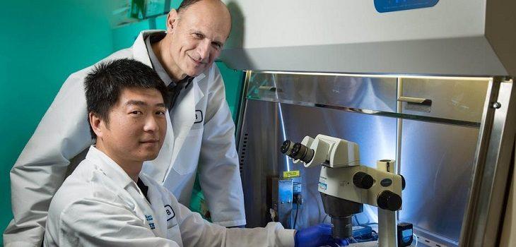 Los investigadores Juan Carlos Izpisua Belmonte y Jun Wu | US Salk Institute | DW