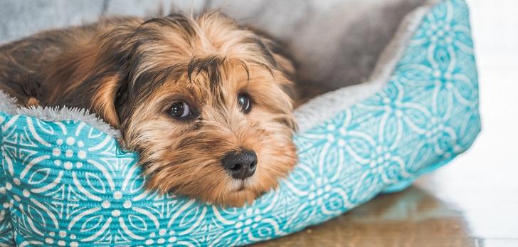 vejez en las mascotas y cómo enfrentarla