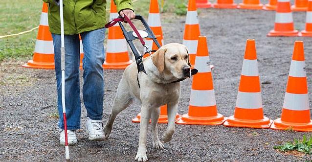 Escuela perros guía