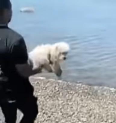 arrojó perro al mar