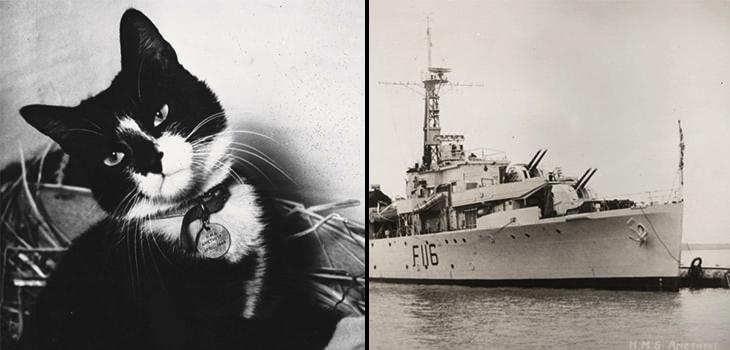 simon, gato marinero