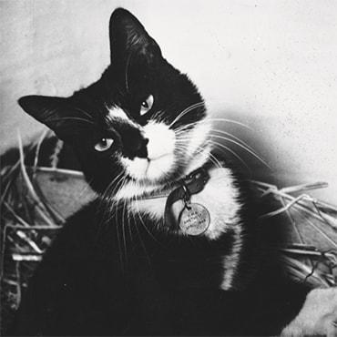 simon, el gato marinero