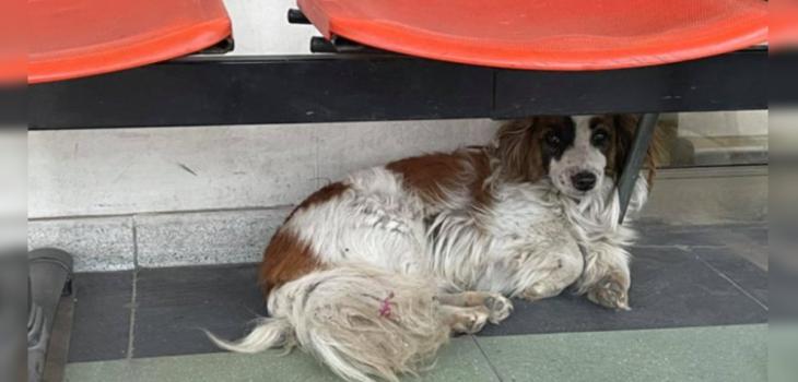 Perro espera a su dueño fallecido en Cesfam de Estación Central