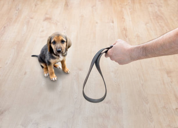 Día del perro maltrato animal