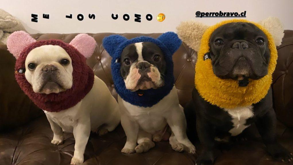 Intentan robar perros de Bruno Zaretti