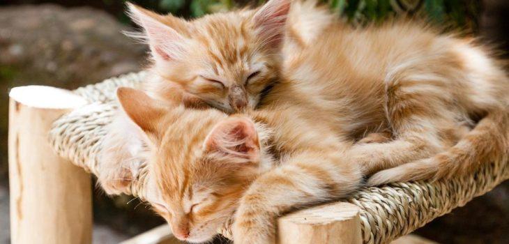 adoptar-un-gato-consejos