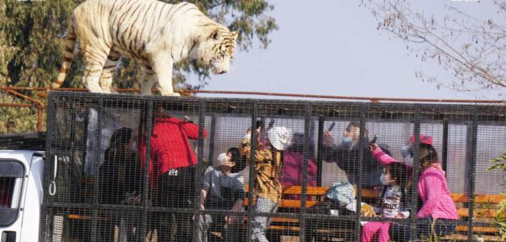 Captura   Parque Safari