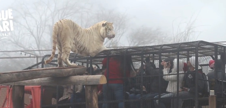 Catalina Torres: la joven de 21 años que perdió la vida tras ser atacada por un tigre en safari de Rancagua