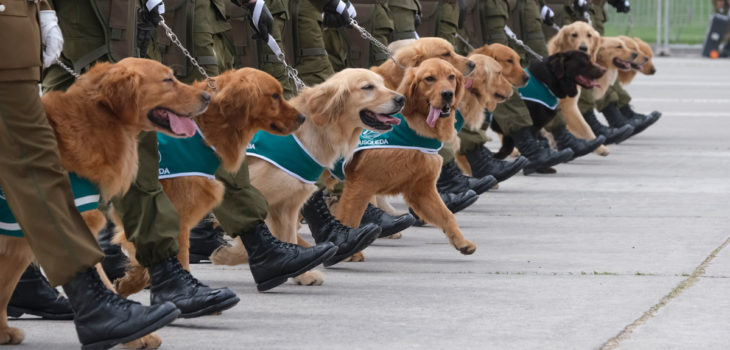 perros en la Parada Militar