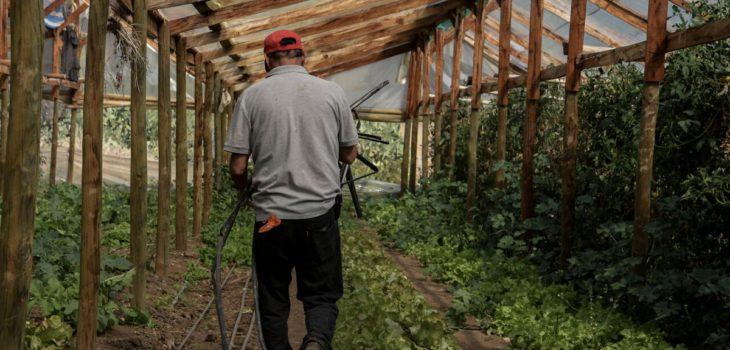 Falta mano de obra: Gobierno llama a postular a más de 5 mil puestos de empleos en sector agrícola